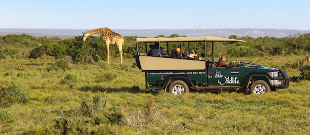 ADDO WILDLIFE, PRIVATE GAME RESERVE
